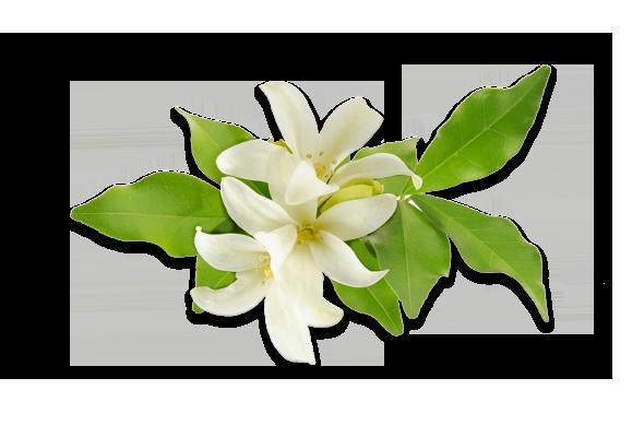 fleur doranger.png