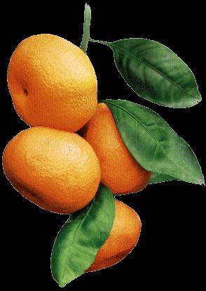 mandarine_2.png
